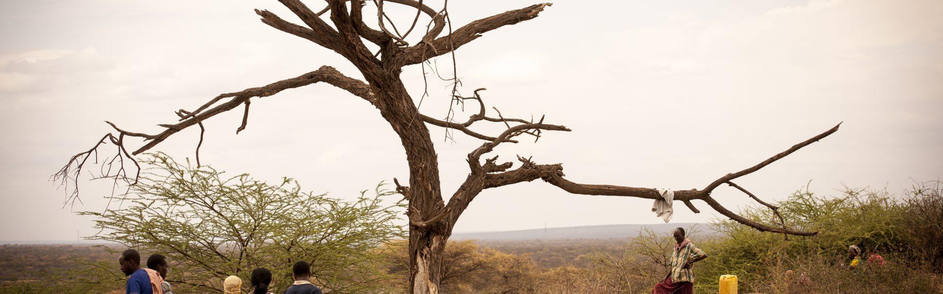 Overleven bij droogte